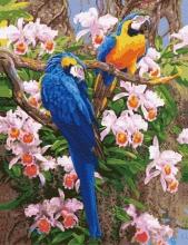 Картина по номерам Яркие попугаи 40х50см.