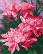 Картина по номерам  Три розовых пиона 40х50 см.