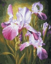 Картина по номерам  Цветение ириса 40х50 см.