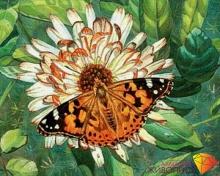 "Картина стразами (набор) ""Бабочка на цветке"""
